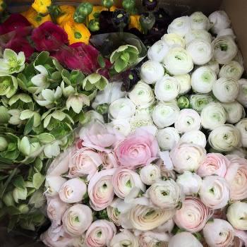 Купить цветы оптом в цены купить цветы